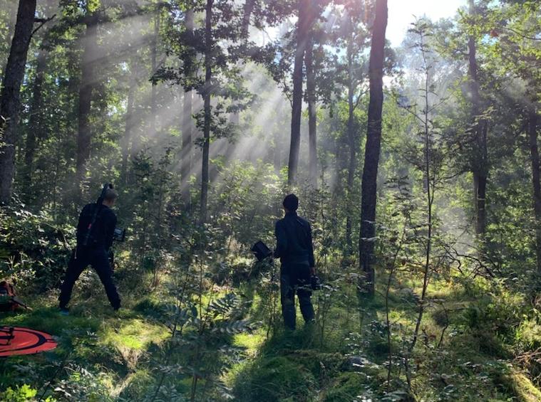 Skogstur i den Sørlandske eikeskogen